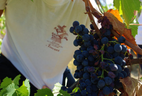 Strade-del-vino-e-dei-sapori-di-toscana_01_600x400px_5